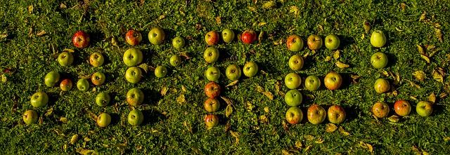Äpfel auf der Wiese