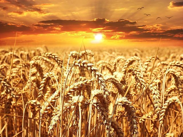 Getreideprodukte jeglicher Art sind in der Paleo Diät verboten